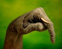 Cool 'Hand' Art - Image 1