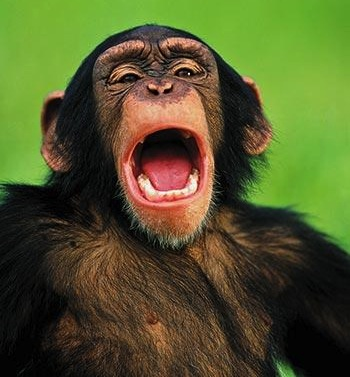 Why do you yawn?  (It's not what you think…) - Image 2